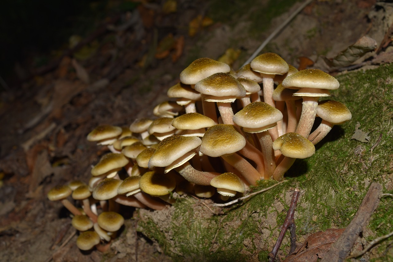 Involtini di sogliole ai funghi